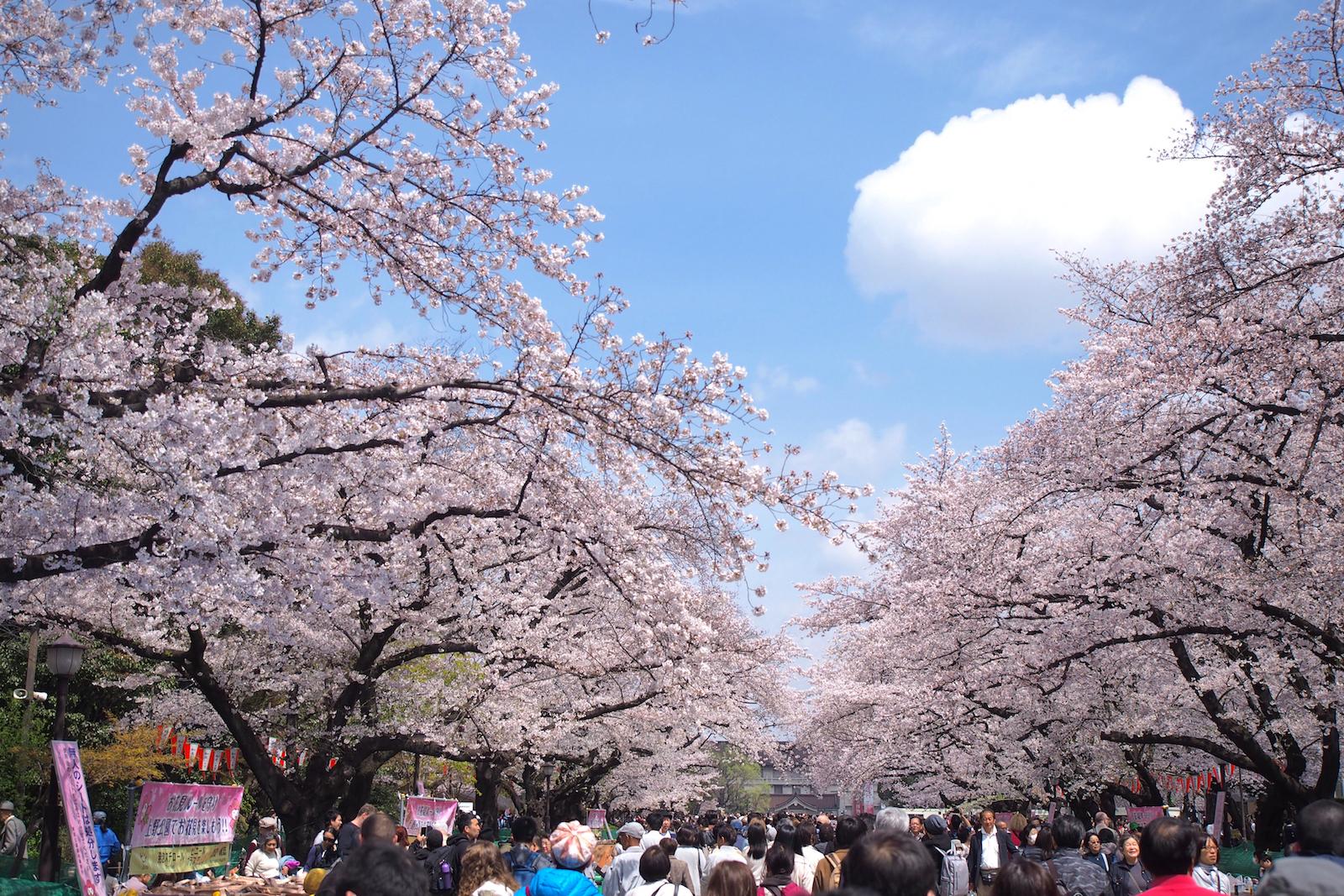 うえの桜まつり