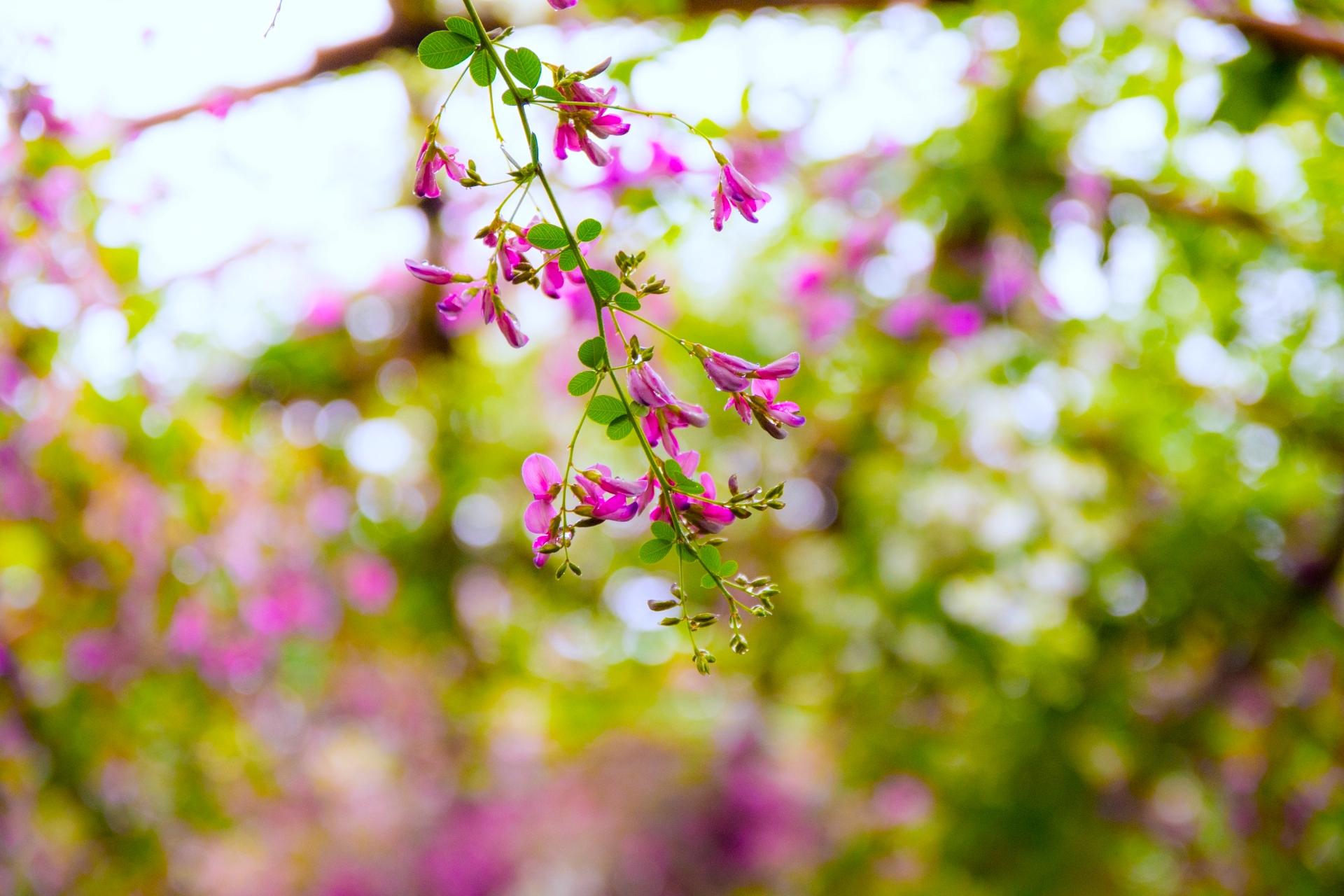 向島百花園『萩まつり』